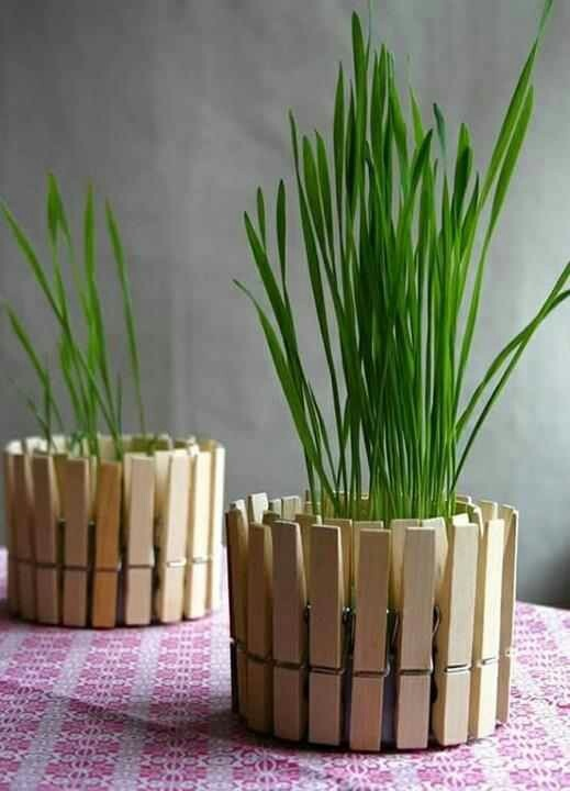 Clip clothespins to a tuna can, add soil, plant. Cute indoor herb garden.