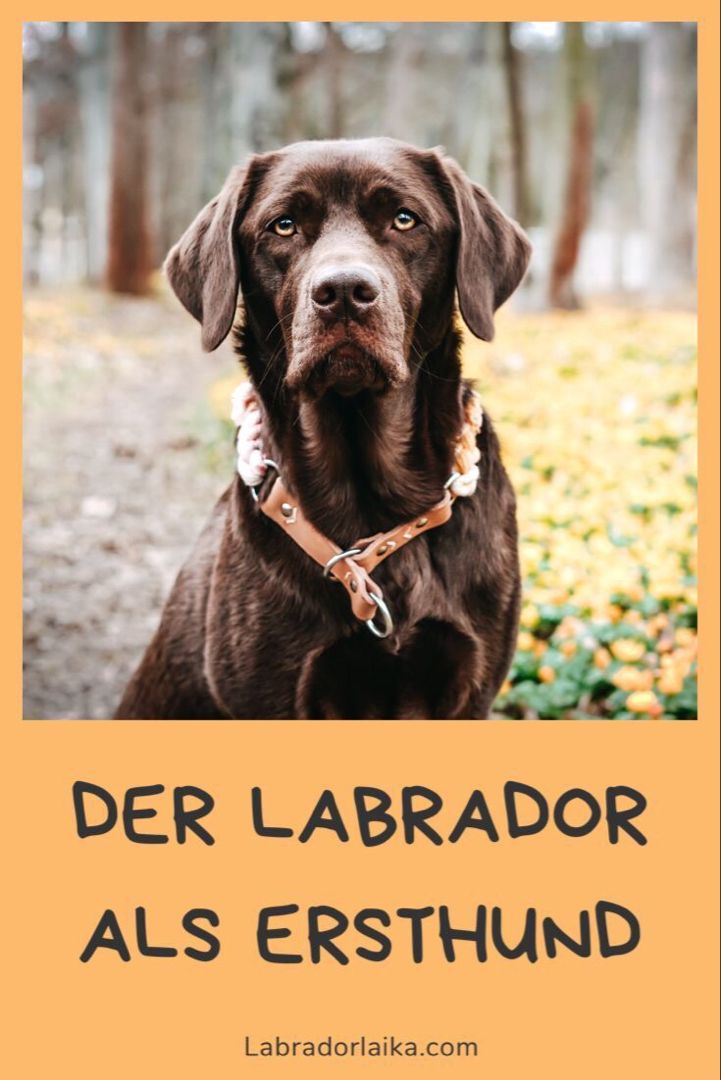 Pin Auf Hunde I Wissenswertes Tipps