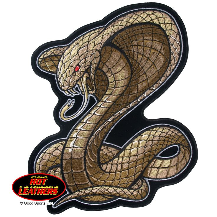 10 best cobra images on snake