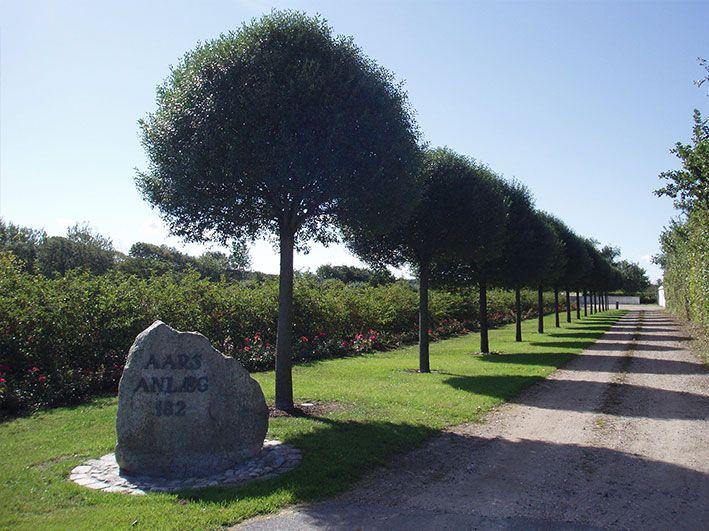 buske og træer i haven - Google-søgning