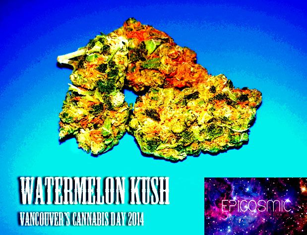 Watermelon Kush [Photography by EpiCosmic]