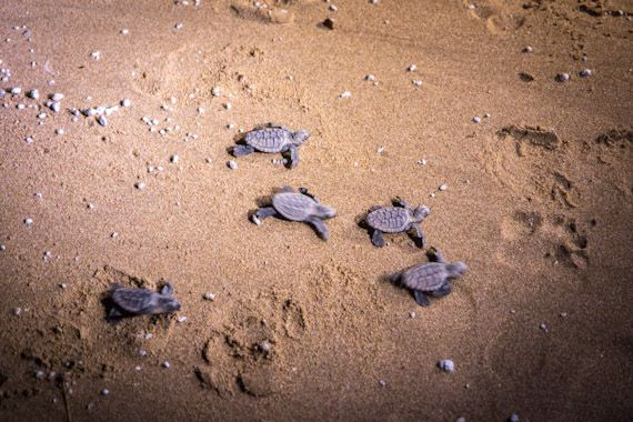 This is on my family holiday bucket list - the Mon Repos Turtle Rookery near Bundaberg.