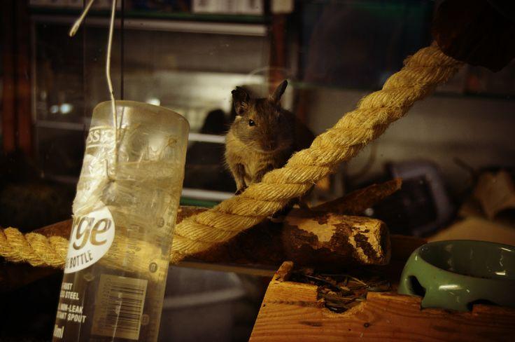 Söpöjä asukkeja Faunattaressa :3 #cute #mouse #rope