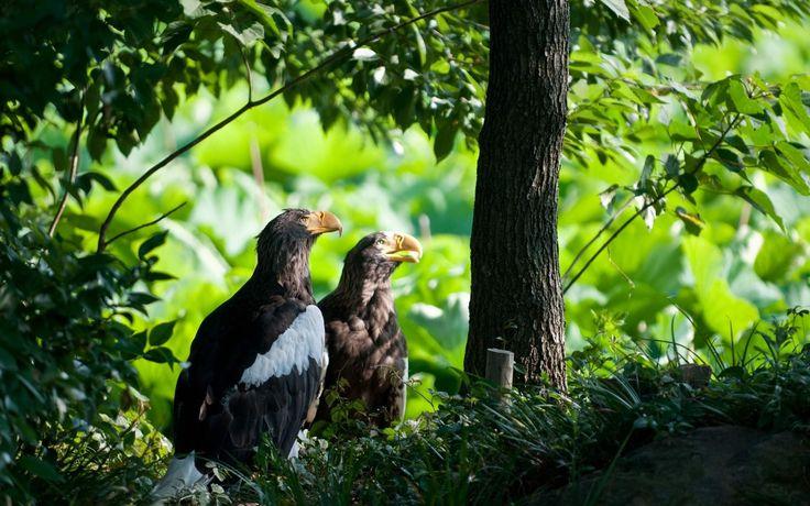 Pretty eagle backround, 584 kB - Ty Gordon