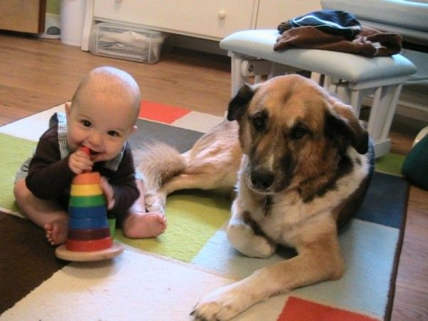 Barks & Babes - class on preparing your dog for your new baby at Swedish Hospital's Lytle Center for Pregnancy & Newborns - Saturday 9/14!