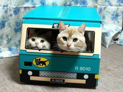 public transport for felines with a puss-pass