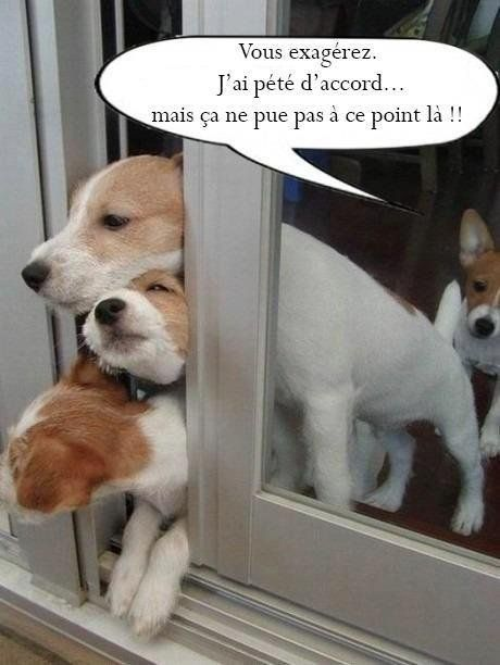 Point n nation chienne