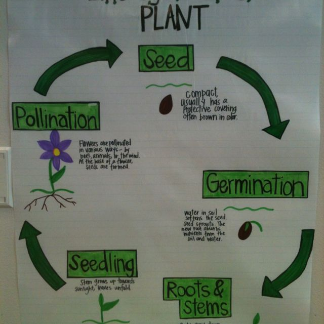 Plant life cycle | 2nd grade science | Pinterest