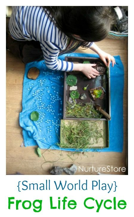 Wonderful nature small world play :: frog life cycle. Great loose parts play for science and nature study and sensory play.