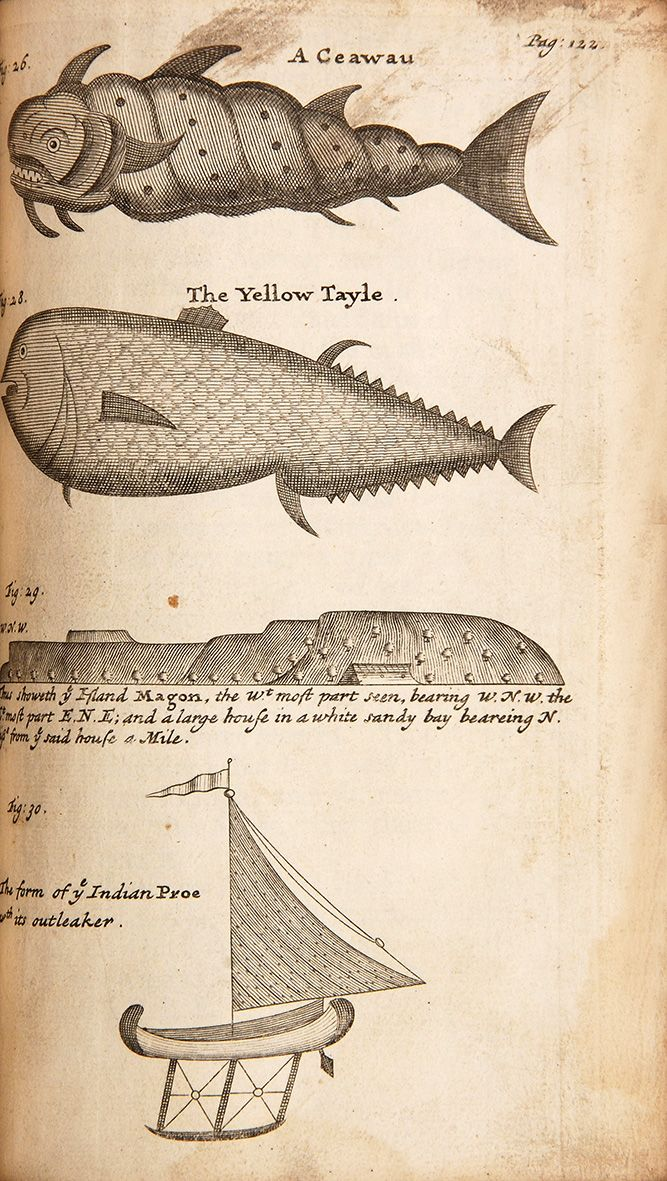 "William Funnell | A Voyage Round the World | A ""Ceawau"" and a Yellow Tail, The Island of Magon (1707)"