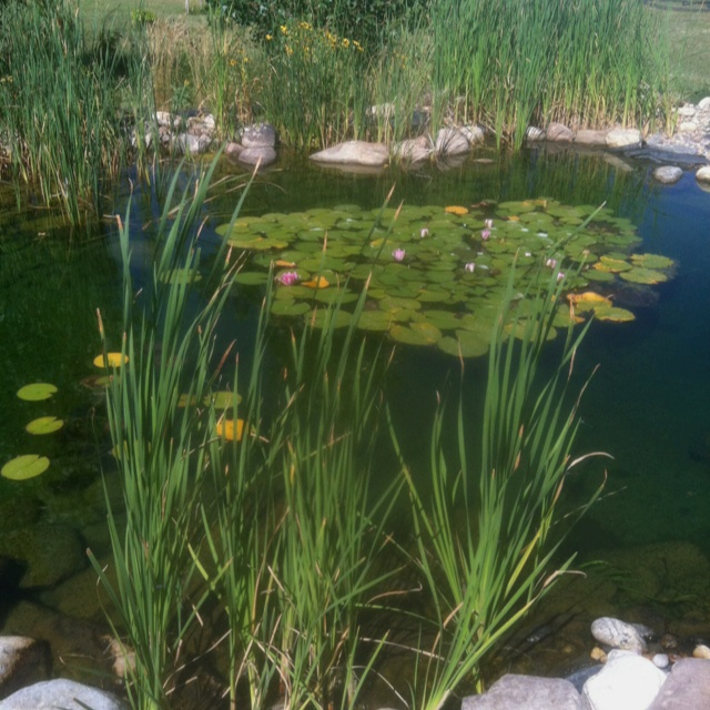 79 best koi pond images on pinterest water features koi for Tarpaulin fish pond