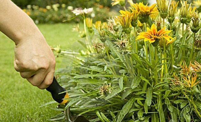 Dicas para cuidar do jardim Saiba como fazer mais coisas em http://www.comofazer.org/casa-e-jardim/dicas-para-cuidar-do-jardim/
