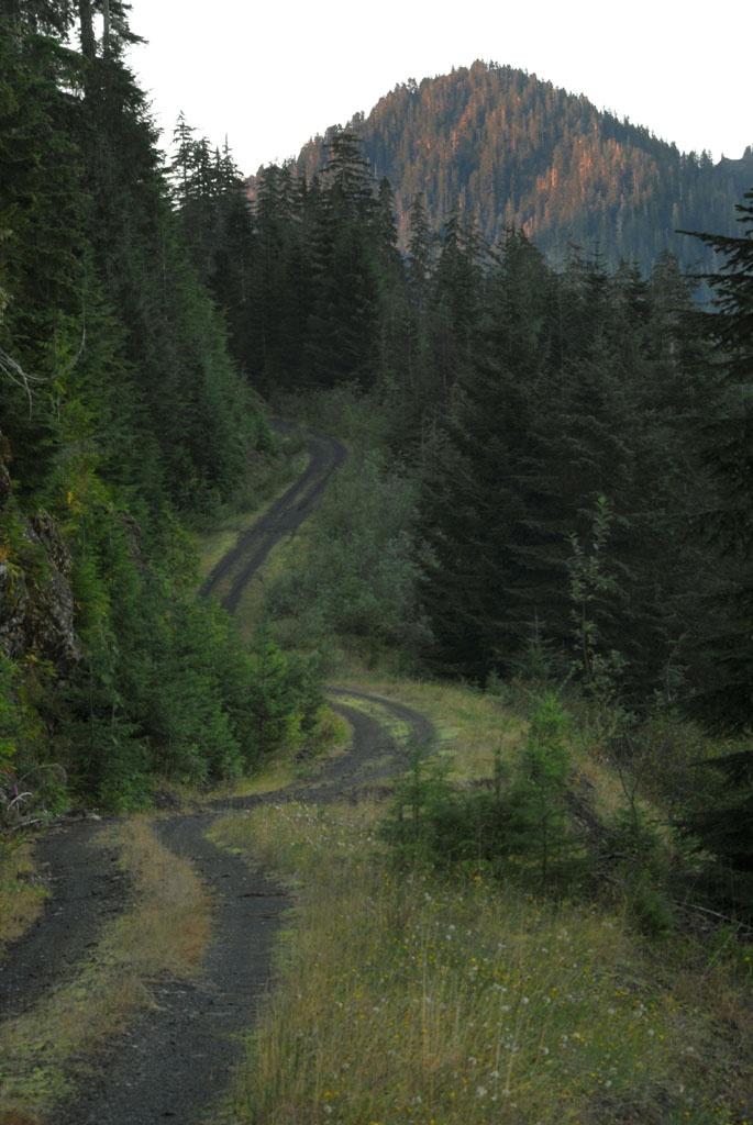 u.s. forest service road, aberdeen, washington