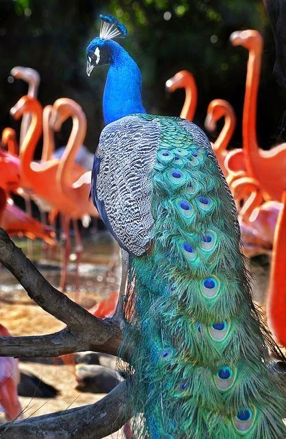 San Diego Zoo, California, @urbandecay  @peektravel  Contest Entry
