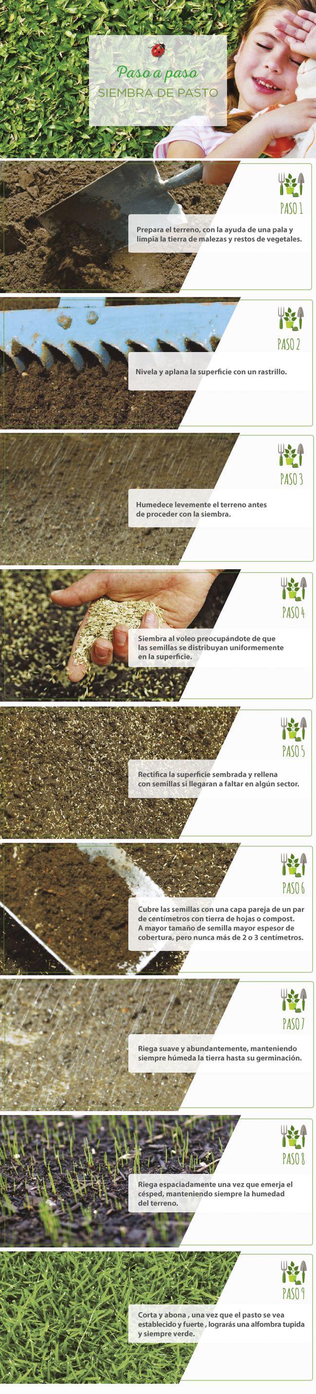 #Siembra #Pasto #PasoApaso #Jardinería #Easy