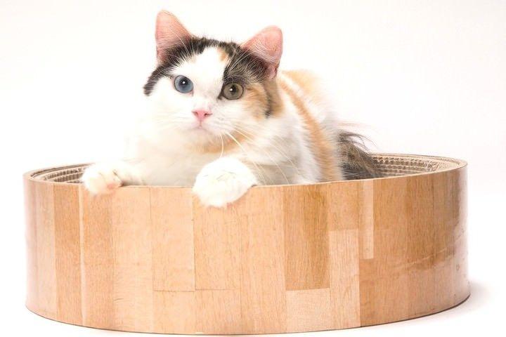 犬小屋みたいなネコのおうち「猫屋 キャットハウス」発売。ネコの好きなダンボール素材を使用している。おうちの玄関先(?)には、爪とぎも!