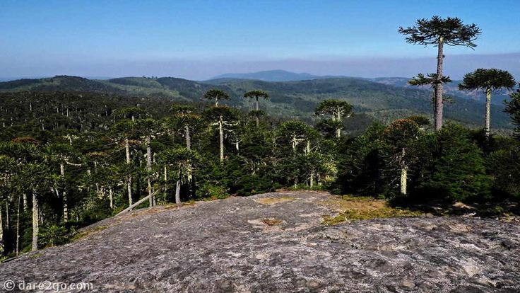 Piedra de Aguila overview of the #Nahuelbuta National Park in Chile. One last remaining cluster of native Monkey Puzzle trees ( #Araucania ).