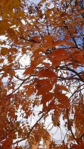 Colores de octubre