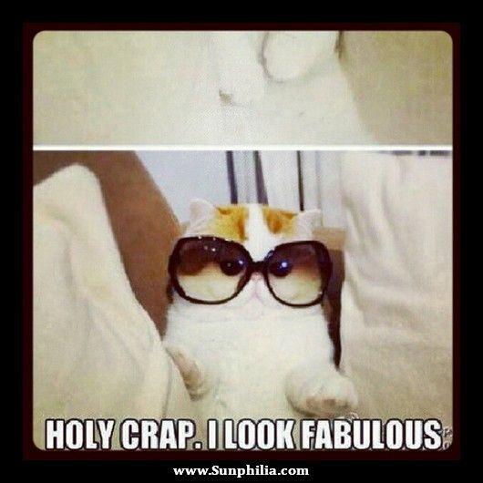 Sunglasses Meme 07 - sunphilia.com/...