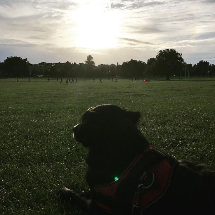 #london #peckham #peckhamryepark #walking #walkingdog #dogwalking #doglover #instadogs #sun #sunset