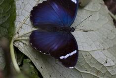 Passage To Africa - Bwindi - Uganda #Butterfly