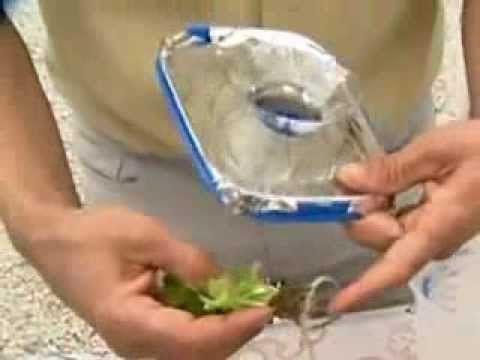 Hidroponia:Cultivo Hidropônico de Verduras em Potes de Sorvete