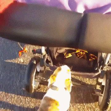 Puppy Saves Energy