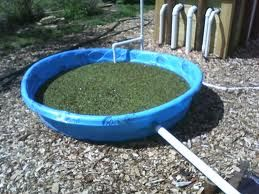 Article on feeding fish and, more importantly, growing your own fish food.