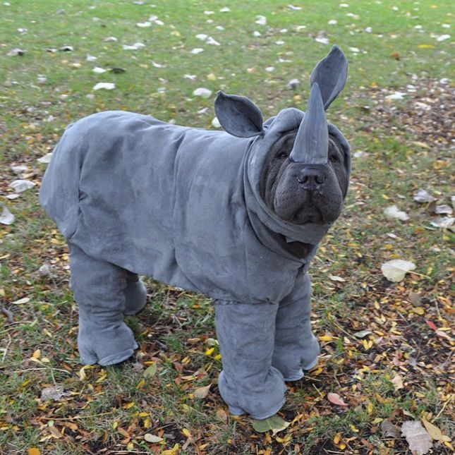 1000+ ideas about Funny Dog Costumes on Pinterest | Pet Costumes, Dog Halloween Costumes and ...