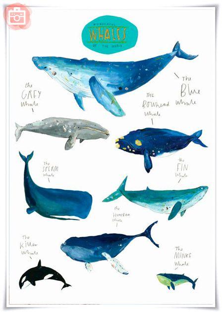 Foto del día: Cuadros infantiles de ballenas | ILLUSTRATION en 2018 ...
