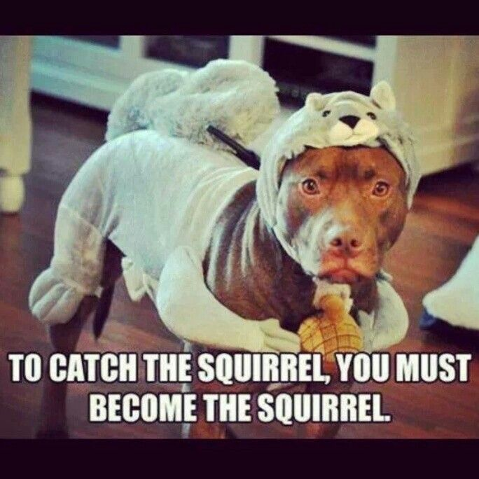 how to catch a live squirrel