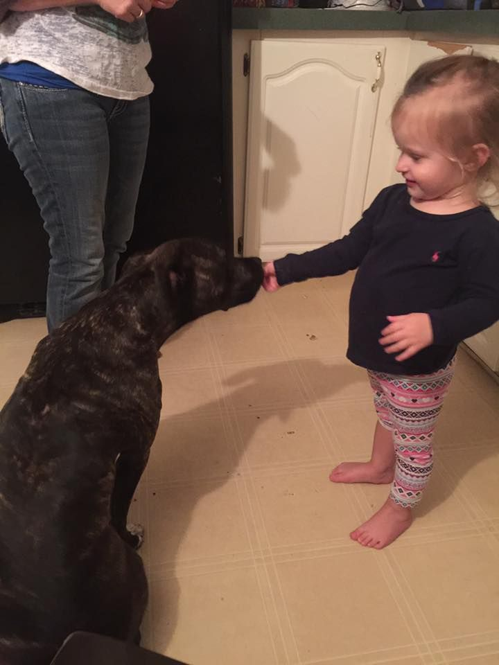 Vicious pitbull attacking toddler! When will this madness end!