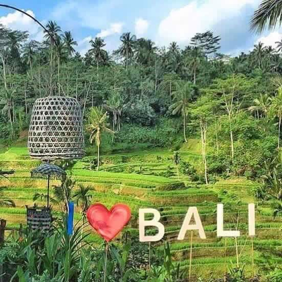 "bali-arrangements on Twitter: ""https://t.co/9v6jSlBQZR"""