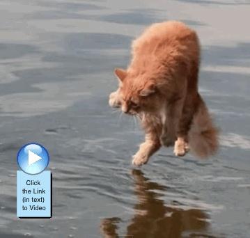 Cats Dogs Stream Vie