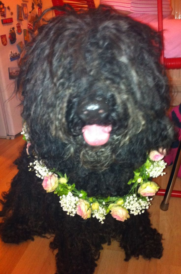 Doggy wedding wear - the ultimate floral dog collar!