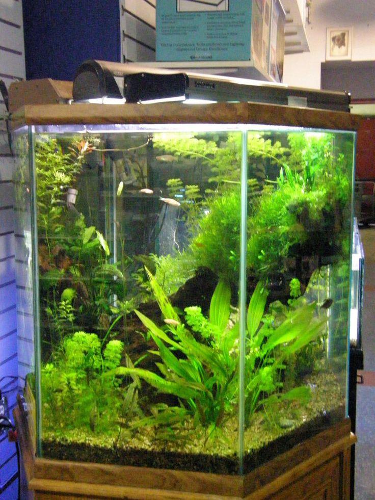 25 best ideas about hexagon fish tank on pinterest for 30 gallon hexagon fish tank