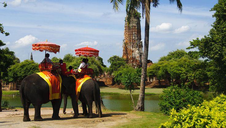 «Про животных и людей»: Таиланд. Слоны / Путешествия / Моя Планета