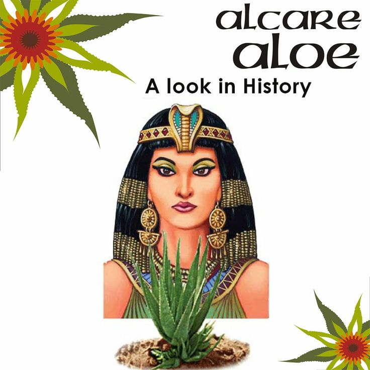 The use of Aloe in History! Aloe has been used for thousands of years for its natural healing properties. Cleopatra, who lived from 68 to 30 B.C., was one of the first documented users of aloe.  Order online: http://on.fb.me/1fJVdeb #history #aloe