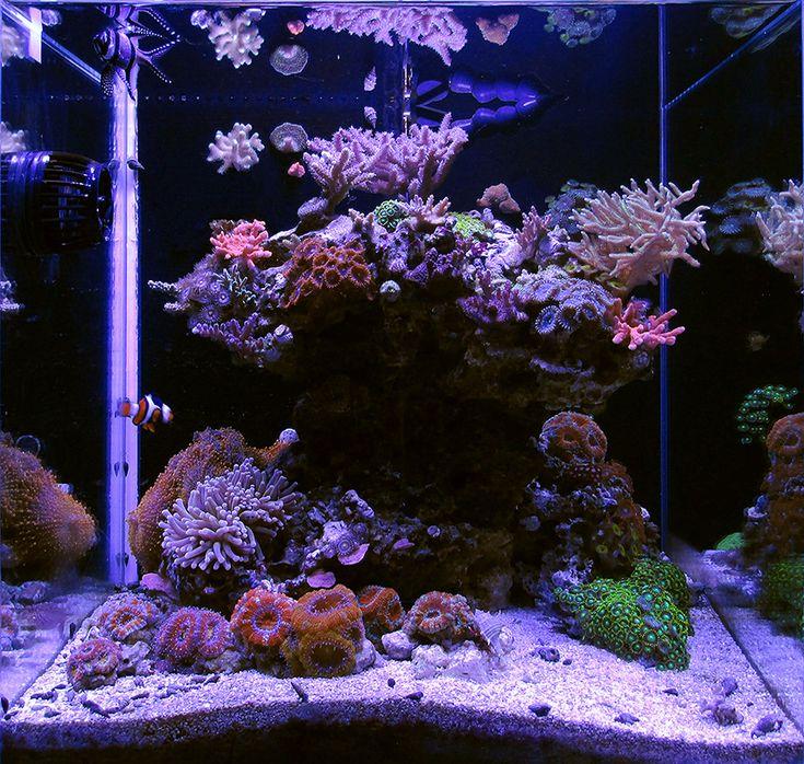 Best 25 reef aquarium ideas on pinterest coral reef aquarium underwater life and marine tank - Petit aquarium design ...