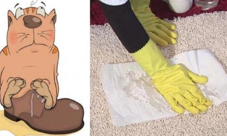 5 Solutions naturelles pour éliminer les odeurs d'urine de chat!