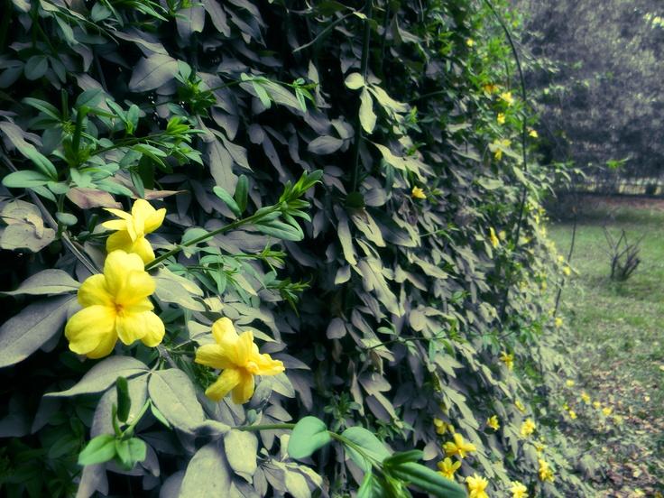 Flores en un mural de hojas.