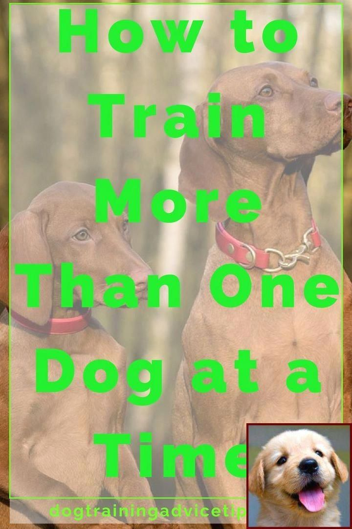 Splendid Carried Out Online Dog Training Purchase Dog Training