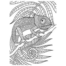 46 Best Adult Coloring Books Sheets Images On Pinterest