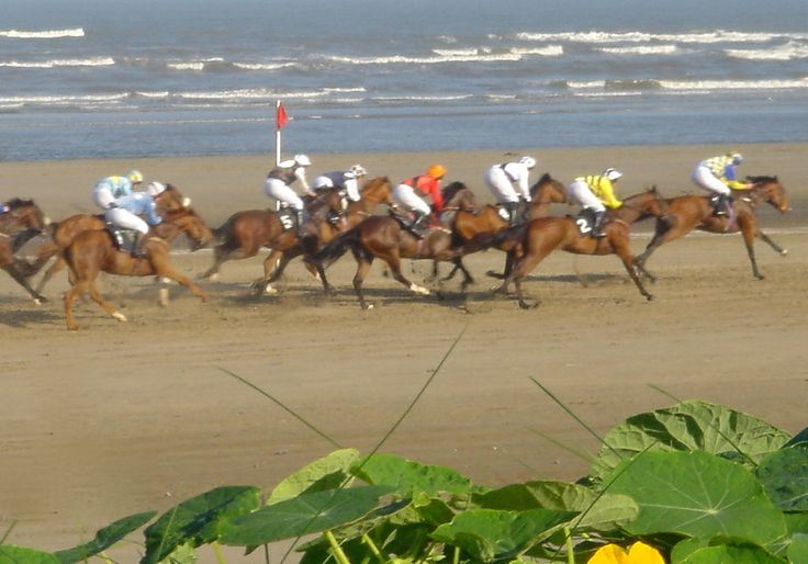 Laytown Strand Races from the beach garden at The Cottages.