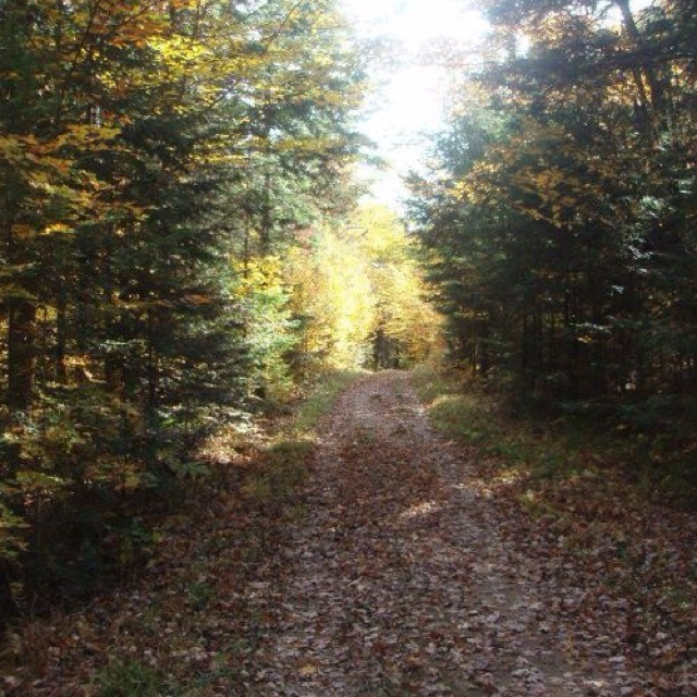 Inside Gatineau Park in the fall