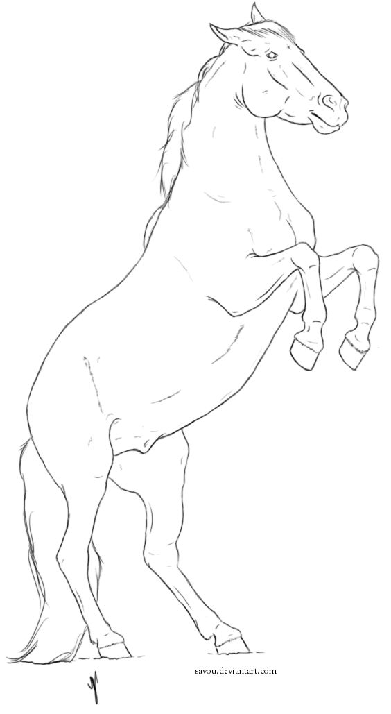 horse head front view drawing