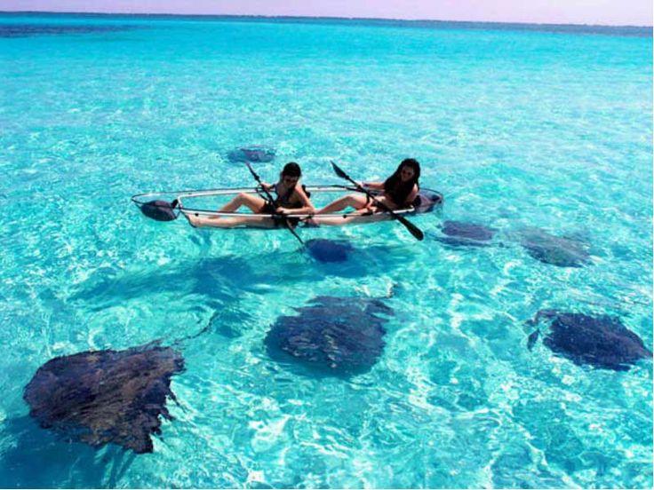EcoTour = catamaran to Key West National Wildlife Refuge + kayaking in see-through kayaks + snorkeling