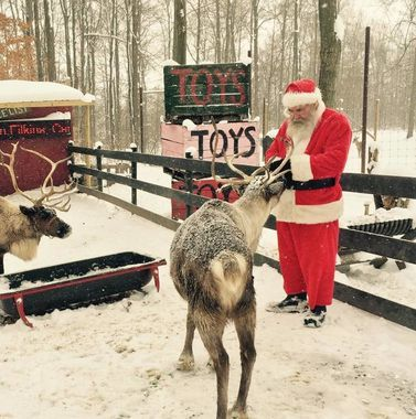How to Keep the Magic of Santa Alive, Step 6: Watch the Reindeer Cam