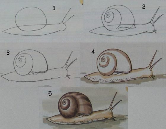 Art for children. Learn to draw a SNAIL - drawing lessons for kids