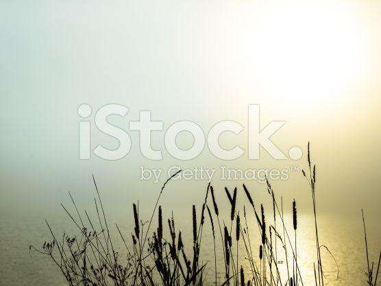 beautiful morning fog over a lake royalty-free stock photo